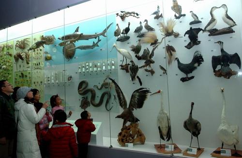 """自然博物馆举办""""动物——人类的朋友""""展览-科普动态"""